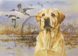 Sporting Dog Series Yellow Labrador