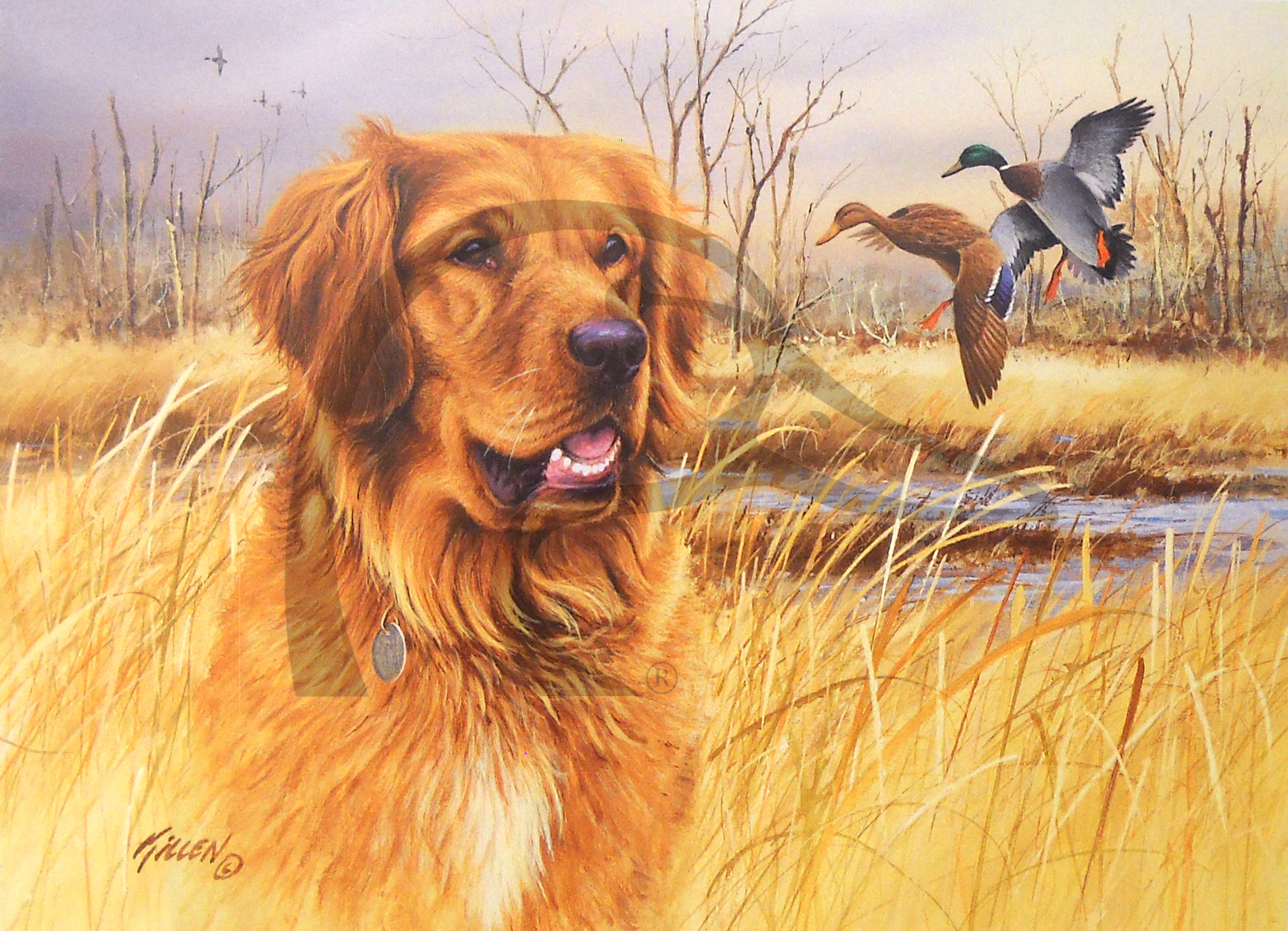 Sporting Dog Series Golden Retriever - Mallards.