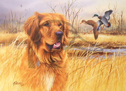 Sporting Dog Series Golden Retriever - Mallards