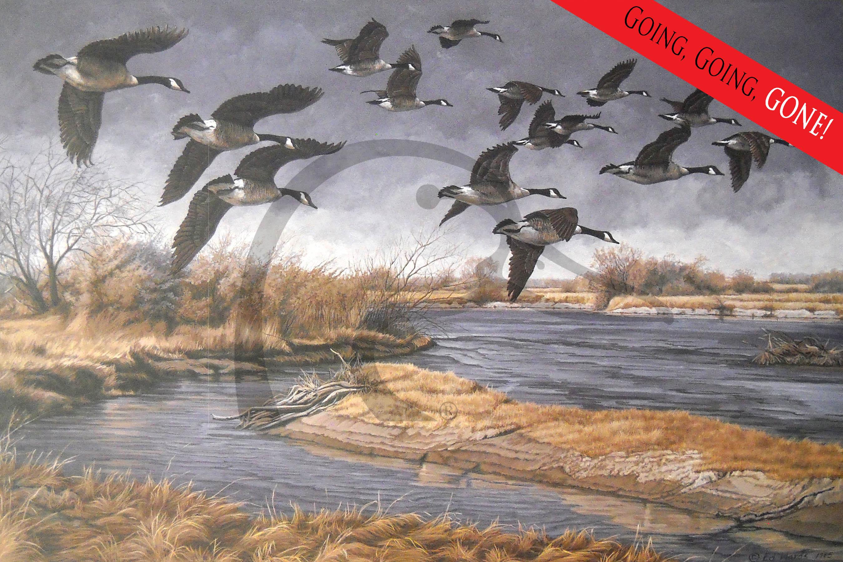 Platte River Honkers