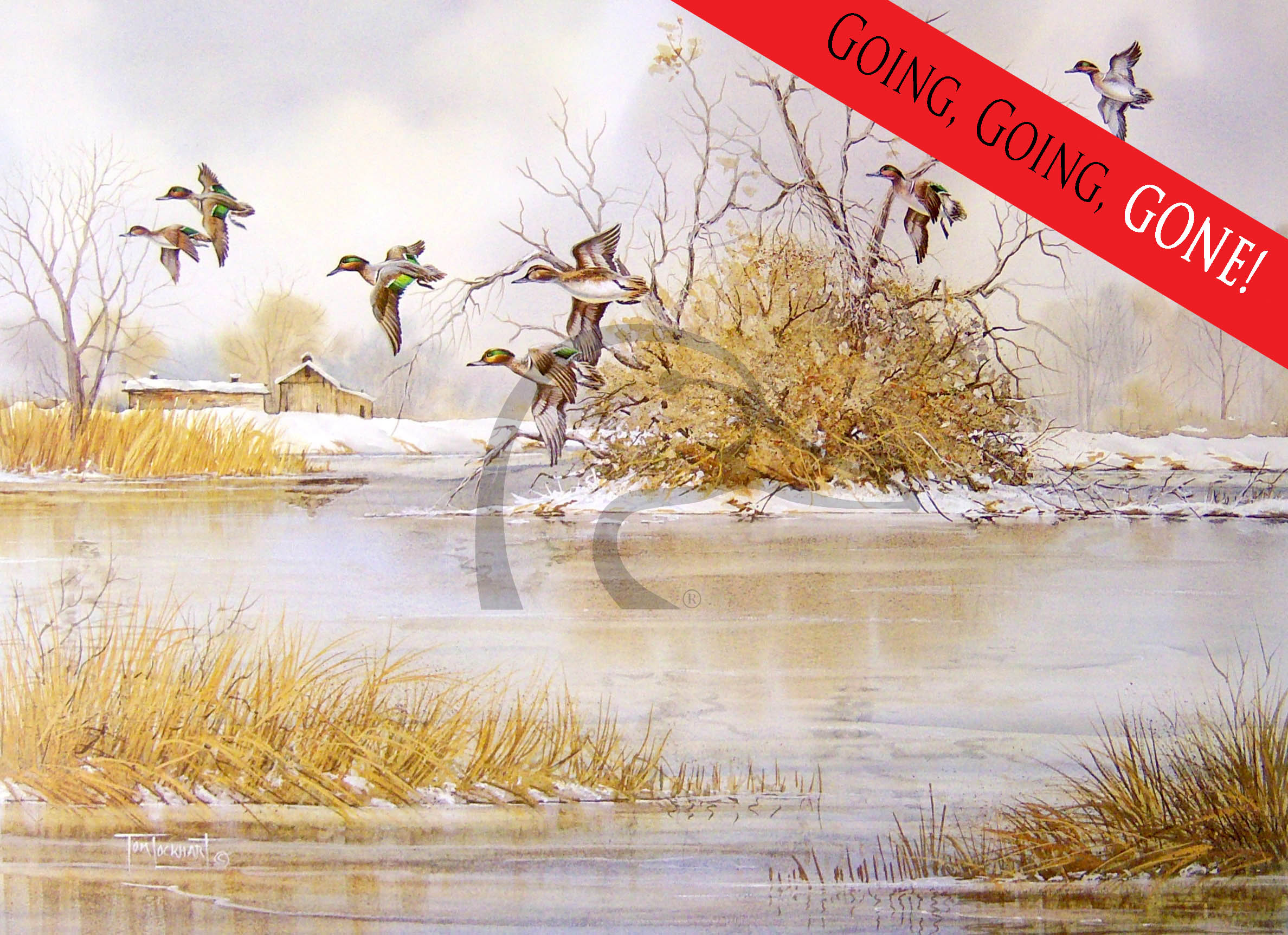 Greenwings Over a Wintry Marsh