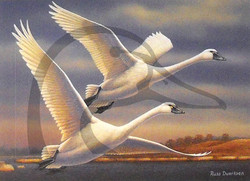 1999 SD Swan