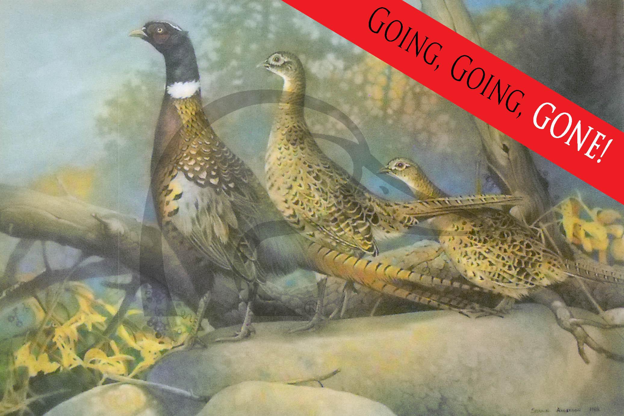 Stone Fence Pheasants