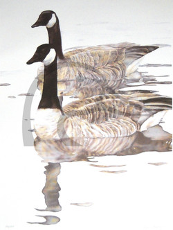 Parallel Geese