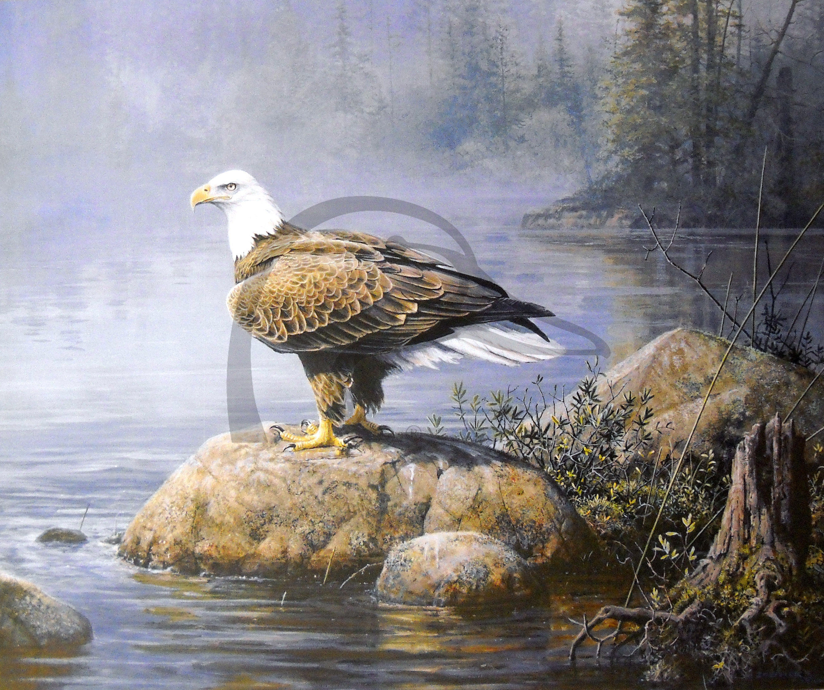 Headwaters Eagle