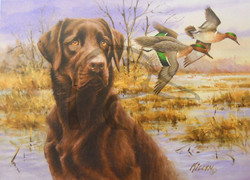 Sporting Dog Series Chocolate Labrador