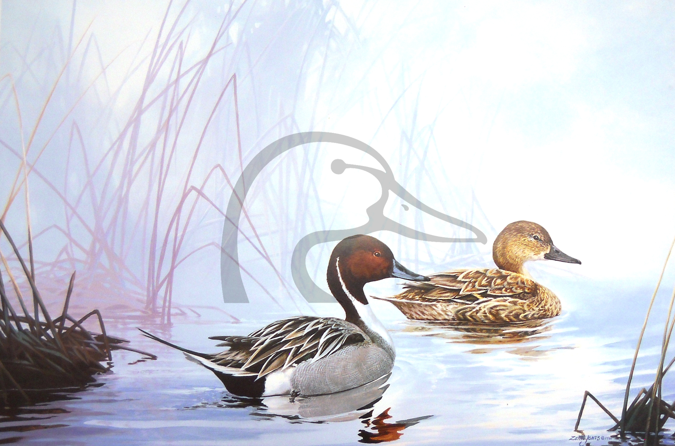 Pintails In The Mist
