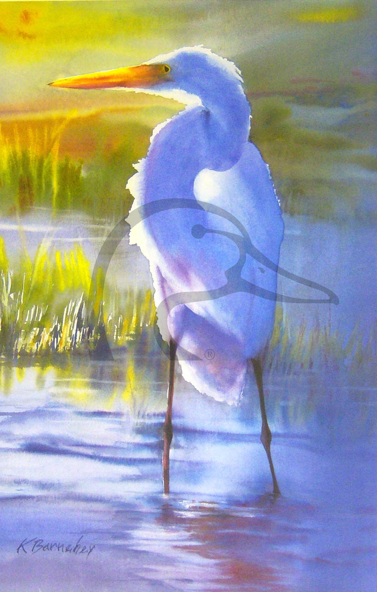 Winter Egret