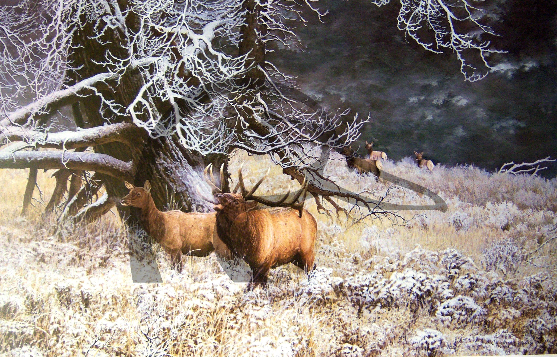 Morning Sage Elk