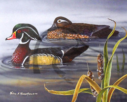 Woodies and Cattails