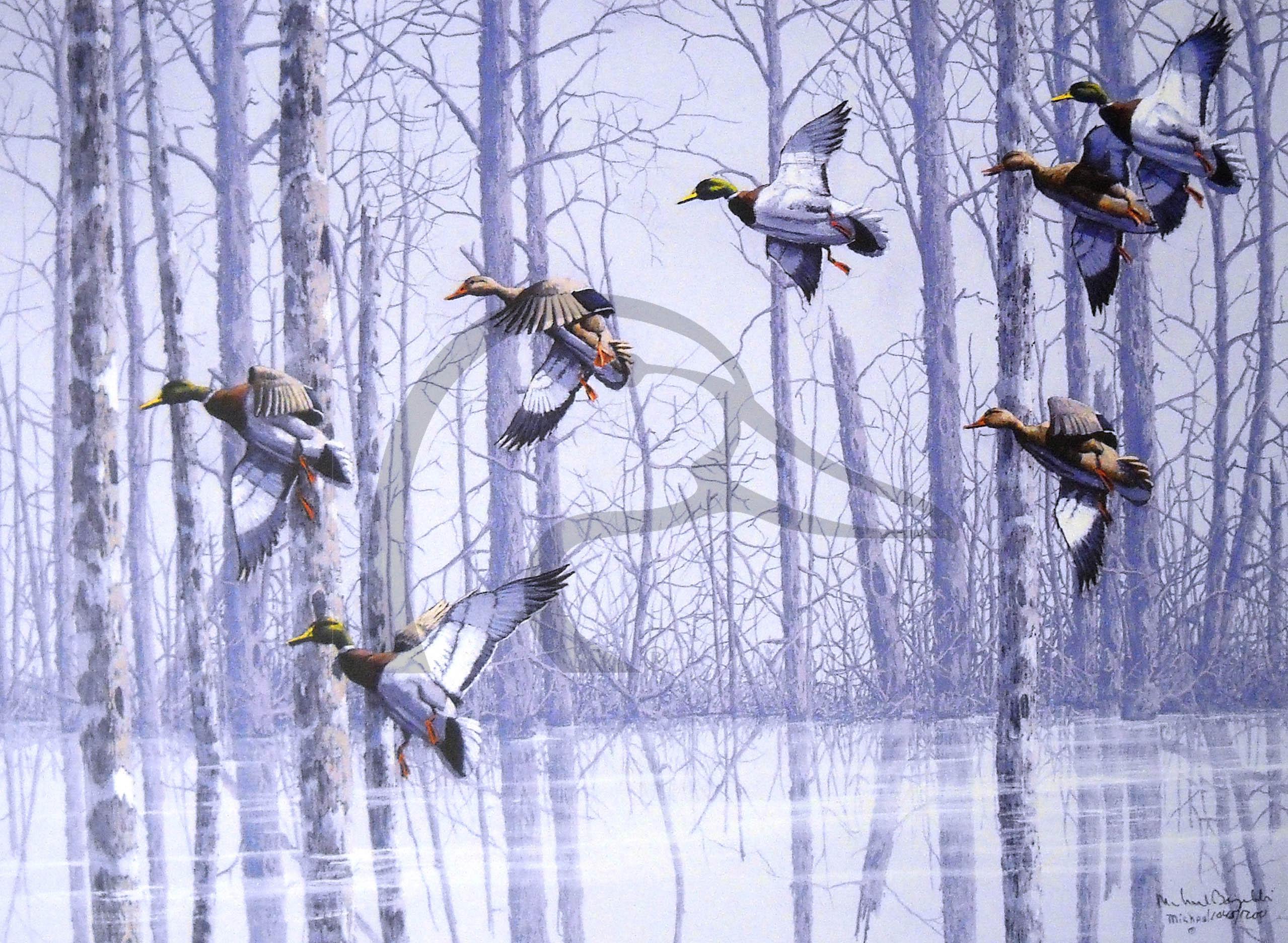 Deadwood Pond Mallards