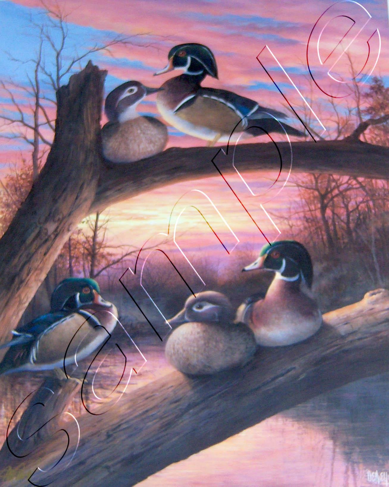 Kansas Royalty 3- Wood Ducks