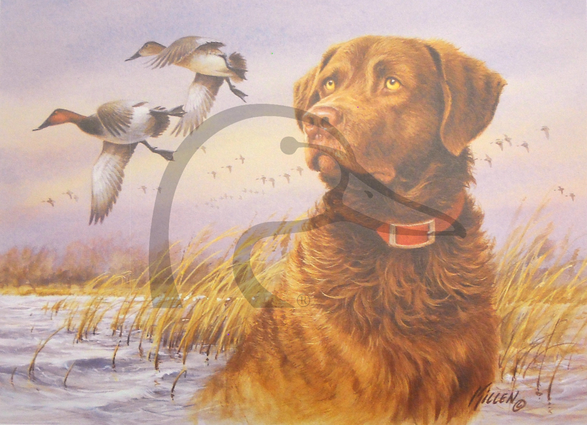 Sporting Dog Series Chesapeake Bay Retriever