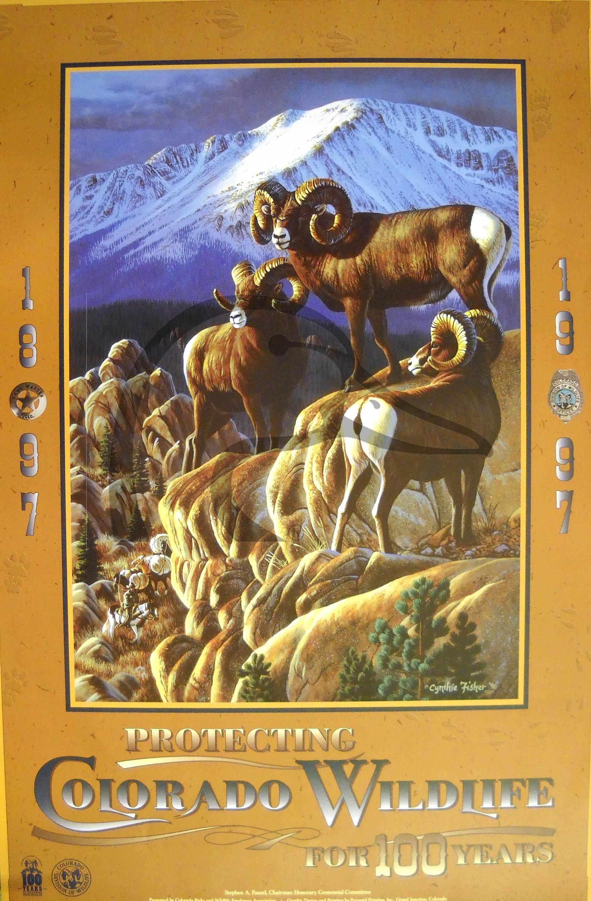 Colorado Wildlife Poster