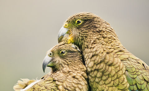 Loving%2520kea_edited_edited.jpg