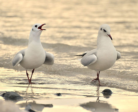 seagulls chatting on beach walk.jpg