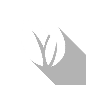 An icon of two leaves growing together overlapping slightly.