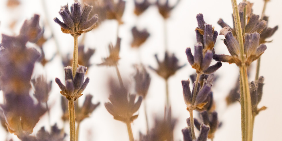 Tune Up Holistic Care Webinar: Using Essential Oils to Manage Stress