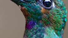Embracing Hummingbird