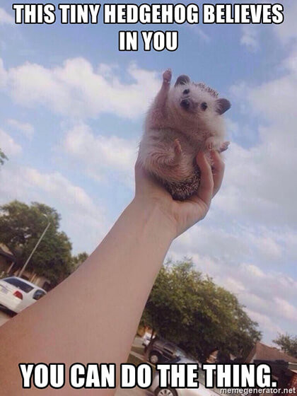 Meme: This tiny hedgehog believes in you, you can do the thing