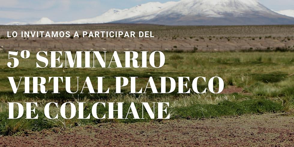 5º seminario virtual construyendo el PLADECO DE COLCHANE