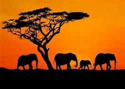South Africa horizon