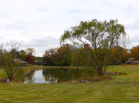 pond from back.jpg