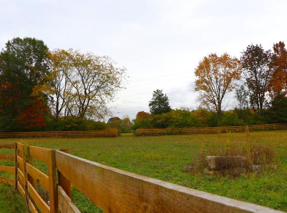 mid pasture.jpg