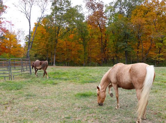 horses eating.jpg