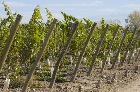Ahora, las Bodegas y Viñedos pueden acceder a Ceres Agro de Finnegans, 100% orientado a su Negocio