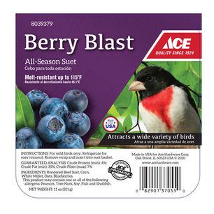 Ace Berry Blast Assorted Species Suet Be