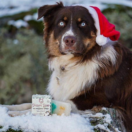 SHOP SMALL: 8 SMALL BUSINESSES FOR YOUR PETS THIS CHRISTMAS🎄