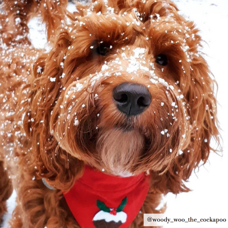 A PET SAFE CHRISTMAS