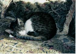 Kat Sleeping.jpg