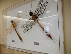 Dragonfly Sculptures at the airport