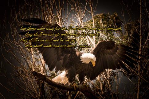 20140614-eagle-vignette-Isa.jpg
