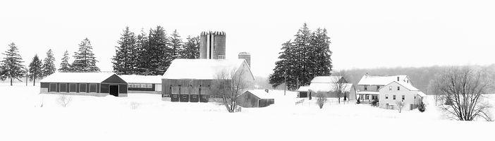 Mennonite Farm, Benjamin Rd. Waterloo