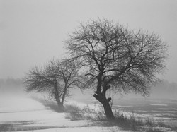 Snowy Day - Maryhill, Ontario