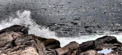 Brave Gull - Monhegan Island