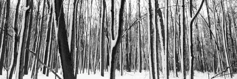 Elmira Forest