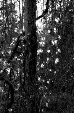 light-031442.jpg