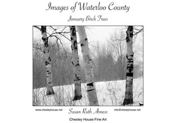 January Birch Trees