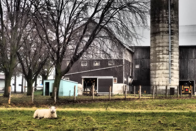 Sheep Farm, St Jacobs, Ontario