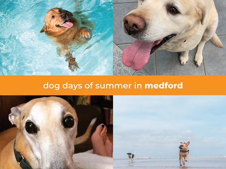 Dog Days of Summer | Meet Me in Medford