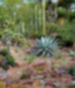 san-diego-botanic-garden-formerly-quail-
