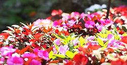 Florida Botanical Garden.JPG