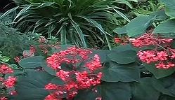 Prague Botanical Garden.JPG