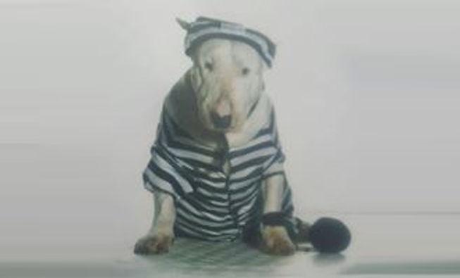 Robbers Dog