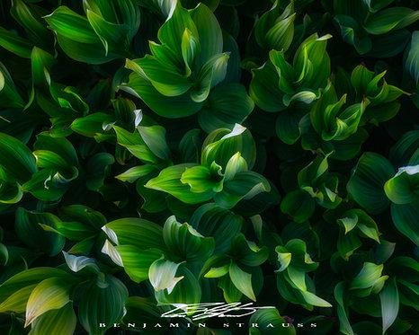 A Plant with Secrets