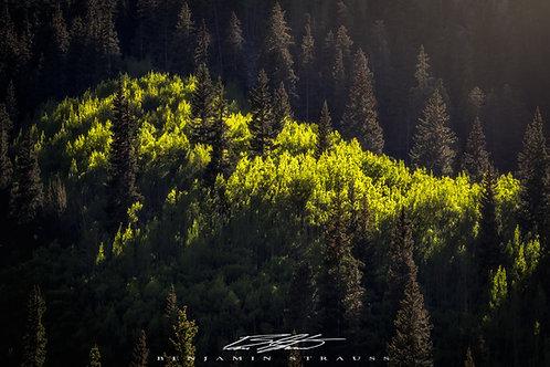 Early Aspen Colors